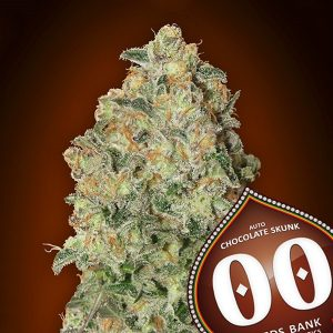 Auto Chocolate Skunk 5 u. fem. 00 Seeds