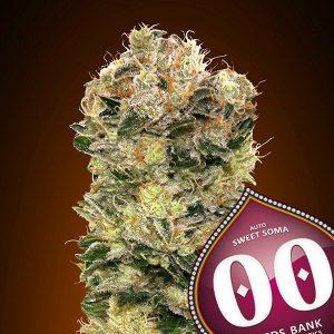 Auto Sweet Soma 5 u. fem. 00 Seeds