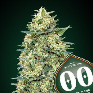 Auto White Widow 5 u. fem. 00 Seeds