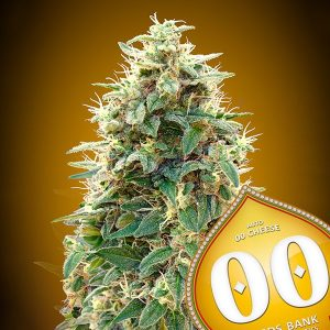 Auto 00 Cheese 5 u. fem. 00 Seeds