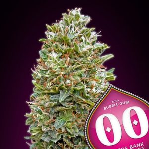Auto Bubble Gum 5 u. fem. 00 Seeds