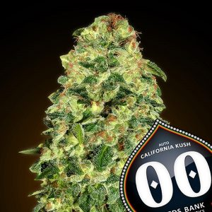 Auto California Kush 5 u. fem. 00 Seeds
