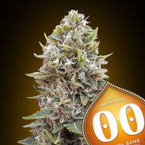 Auto Cheese Berry 5 u. fem. 00 Seeds