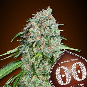 Chocolate Skunk CBD 5 u. fem. 00 Seeds