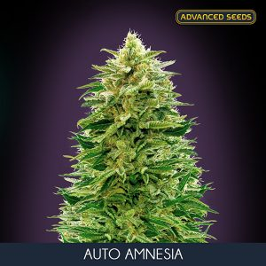 Auto Amnesia 1 u. blister x 10 u. fem. Advanced Seeds