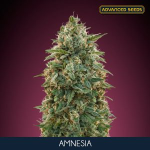 Amnesia 1 u. blister x 10 u. fem. Advanced Seeds