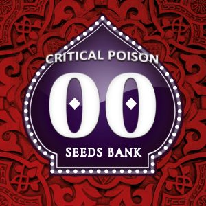 Critical Poison 5 u. fem. 00 Seeds