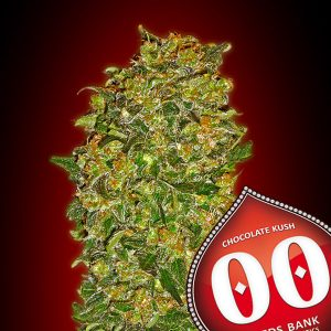 Chocolate Kush 5 u. fem. 00 Seeds