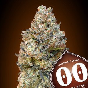 Chocolate Skunk 5 u. fem. 00 Seeds