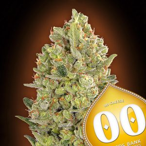 00 Cheese 5 u. fem. 00 Seeds