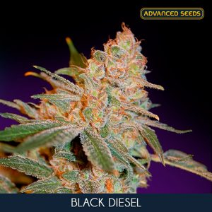Black Diesel 1 u. Blister x 10 fem. Advanced Seeds