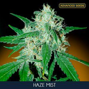 Haze Mist 1 u. Blister x 10 fem. Advanced Seeds