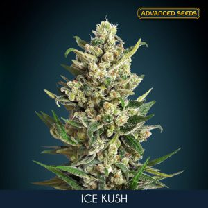 Ice Kush 1 u. fem. Advanced Seeds