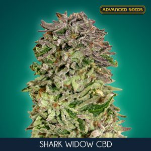 Shark Widow CBD 3 u. fem. Advanced Seeds