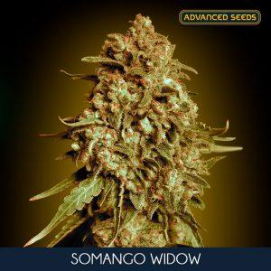 Somango Widow 1 u. fem. Advanced Seeds