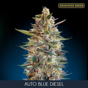 Auto Blue Diesel 1 u. Blister x 10 fem. Advanced Seeds