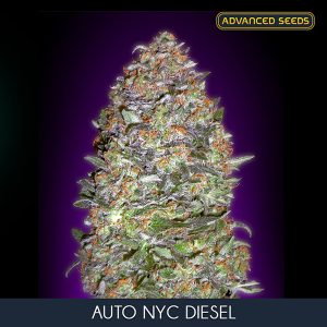 Auto New York City Diesel 1 u. Blister x10 fem. Advanced Seeds