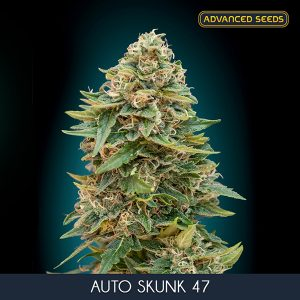 Auto Skunk 47 – 1 u. Blister x 10 fem. Advanced Seed
