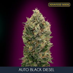 Auto Black Diesel 1 u. Blister x 10 fem. Advanced Seeds