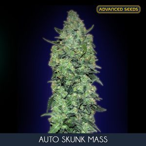 Auto Skunk Mass 10 u. fem. Advanced Seeds