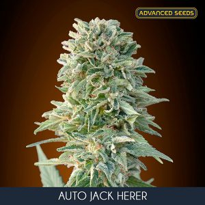 Auto Jack Herer 3 u. fem. Advanced Seeds