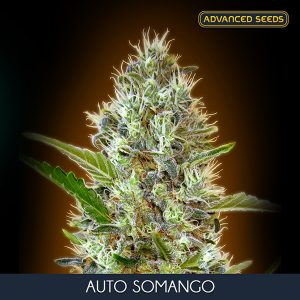 Auto Somango 1 u. Blister x 10 fem. Advanced Seeds