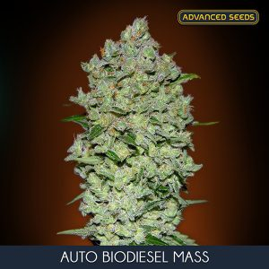 Auto Biodiesel Mass 1 u. Blister x 10 fem. Advanced Seeds