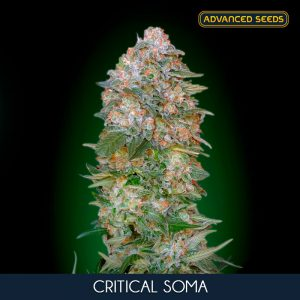 Critical Soma 1 u. Blister x 10 fem. Advanced Seeds