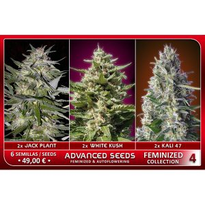 Female Collection #4 – Advanced Seeds