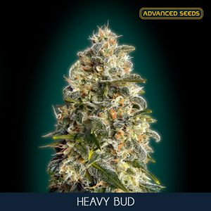 Heavy Bud 10 u. fem. Advanced Seeds